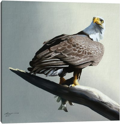 Bald Eagle With Its Catch On Branch Canvas Art Print