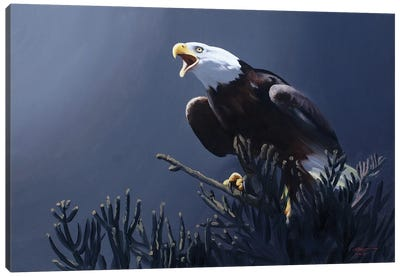 Bald Eagle At Top Of Pine Tree Canvas Art Print