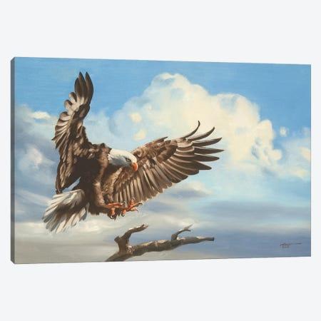 "Bald Eagle Landing On Tree Branch Canvas Print #RSR240} by D. ""Rusty"" Rust Canvas Art Print"