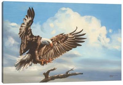 Bald Eagle Landing On Tree Branch Canvas Art Print