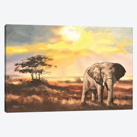 "Elephant In The Sahara Desert Canvas Print #RSR243} by D. ""Rusty"" Rust Art Print"