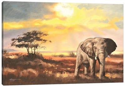 Elephant In The Sahara Desert Canvas Art Print