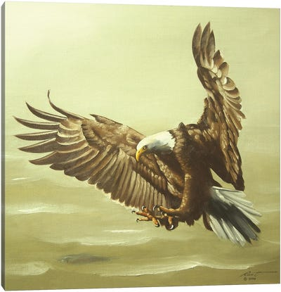 Eagle In For A Landing Canvas Art Print