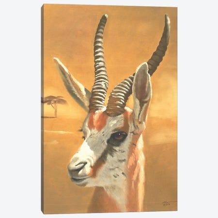 "Gazelle Canvas Print #RSR260} by D. ""Rusty"" Rust Canvas Print"