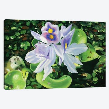 "Hyacinths Canvas Print #RSR279} by D. ""Rusty"" Rust Canvas Artwork"