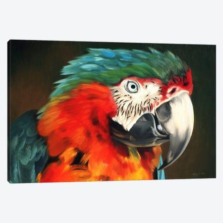 "Macaw Canvas Print #RSR281} by D. ""Rusty"" Rust Canvas Art Print"
