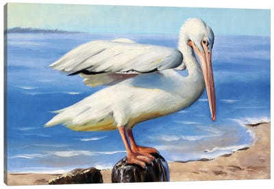 White Pelican on a Perch Canvas Art Print