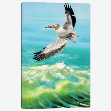 """White Pelican on the Hunt Canvas Print #RSR304} by D. """"Rusty"""" Rust Canvas Art Print"""