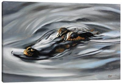 Alligator Out For Swim Canvas Art Print