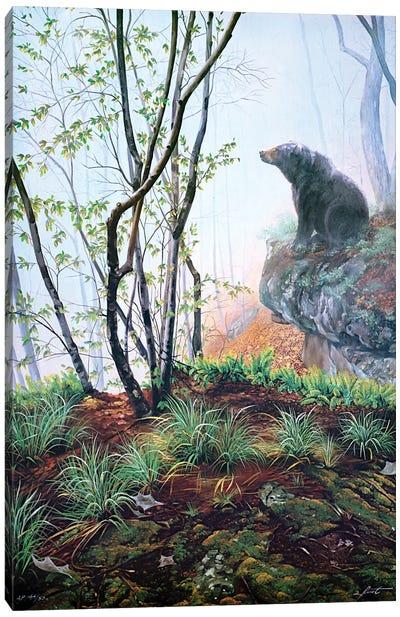 Black Bear On Rock Ledge In Early Spring Canvas Art Print