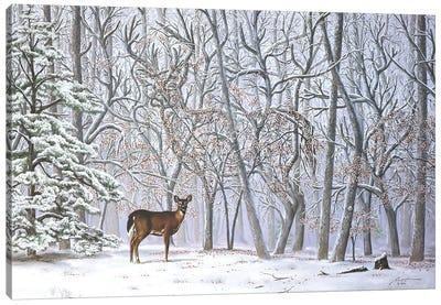 Big Buck - Illusion Canvas Art Print