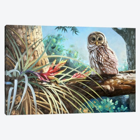 """Barred Owl In Tree Canvas Print #RSR409} by D. """"Rusty"""" Rust Canvas Print"""