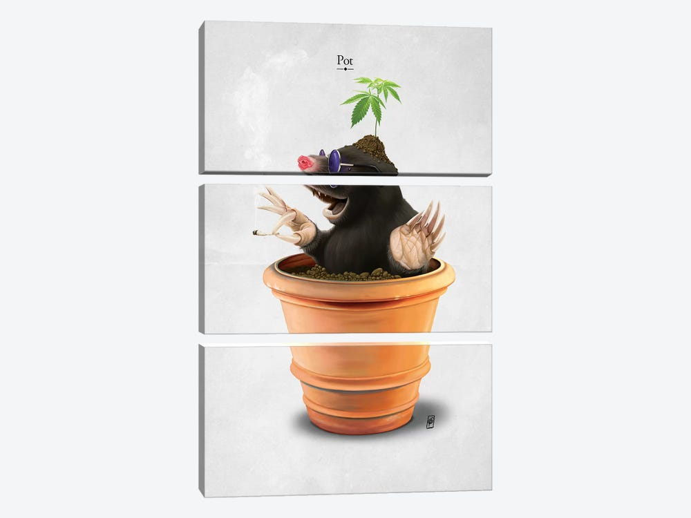 Pot I by Rob Snow 3-piece Canvas Wall Art