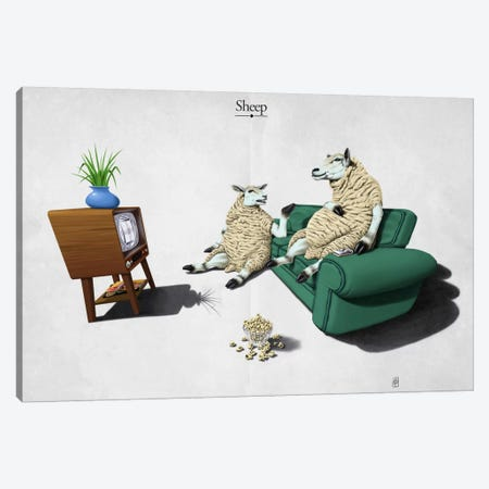 Sheep Canvas Print #RSW27} by Rob Snow Canvas Art