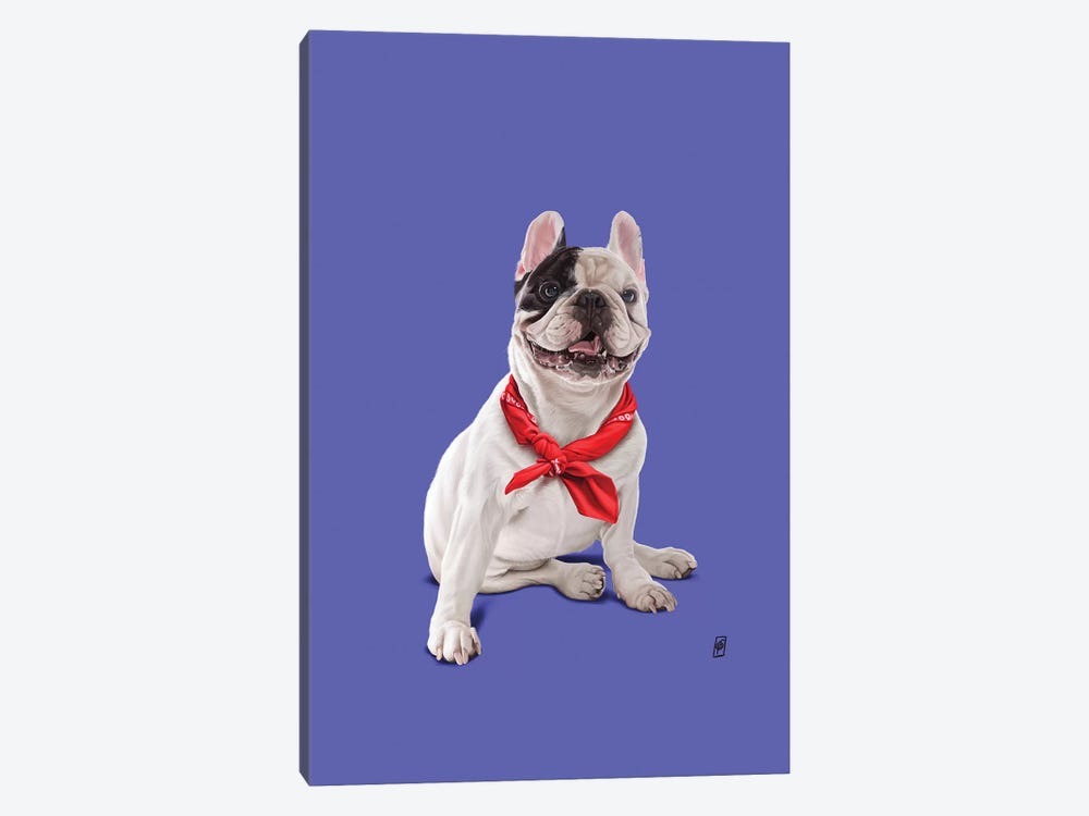 Frenchie II by Rob Snow 1-piece Canvas Wall Art