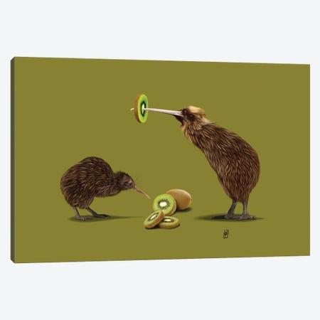 Kiwi (Colour) Canvas Print #RSW387} by Rob Snow Art Print