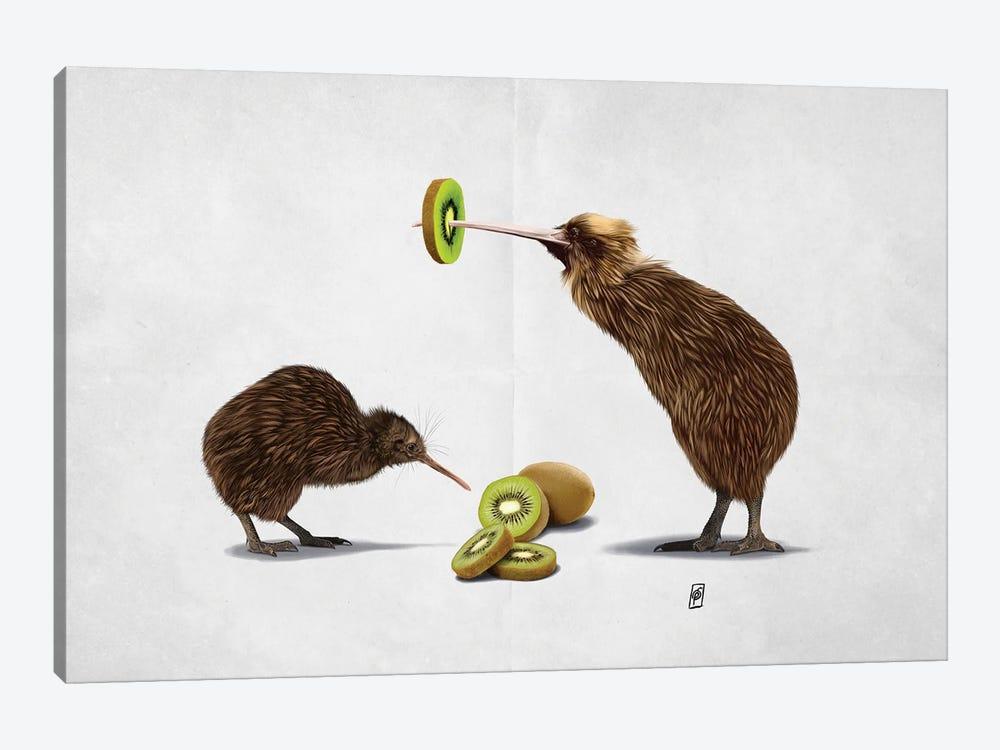 Kiwi (Wordless) by Rob Snow 1-piece Canvas Wall Art