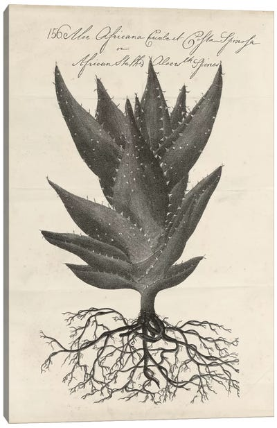 Thornton Succulents I Canvas Art Print