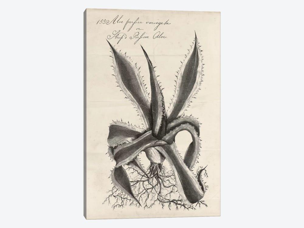 Thornton Succulents III by Robert Thornton 1-piece Canvas Wall Art