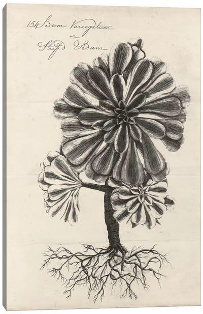Thornton Succulents IV Canvas Art Print