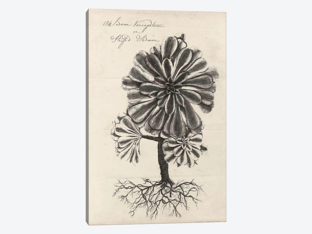 Thornton Succulents IV by Robert Thornton 1-piece Canvas Print