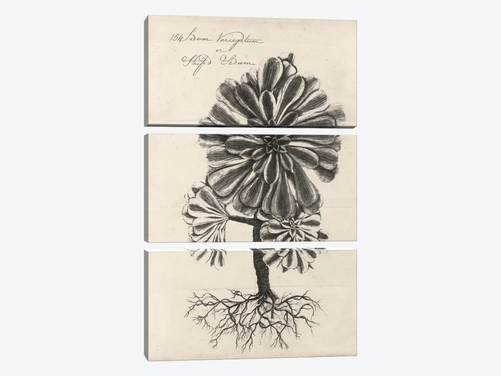 Thornton Succulents IV by Robert Thornton 3-piece Canvas Art Print