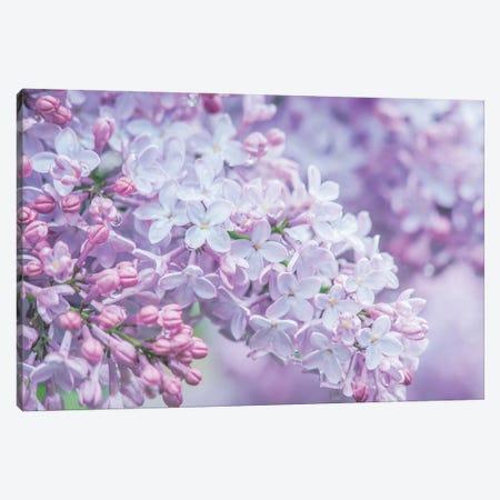 USA, Washington State, Seattle. Kubota Garden, lilac close-up. Canvas Print #RTI38} by Rob Tilley Art Print