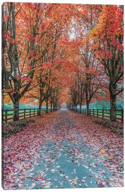USA, Washington State, Snoqualmie. Autumn country lane. Canvas Art Print