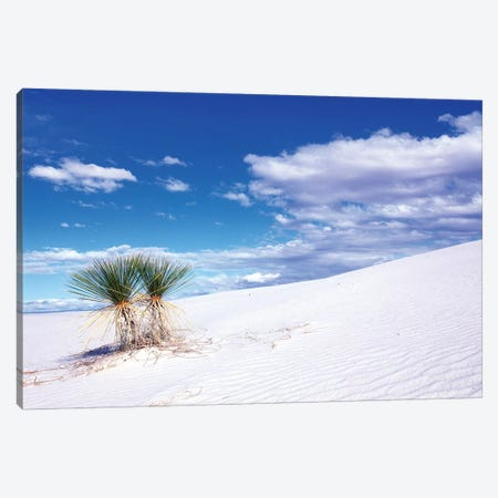 Soaptree Yuccas, White Sands National Monument, Tularosa Basin, New Mexico, USA Canvas Print #RTI8} by Rob Tilley Canvas Wall Art