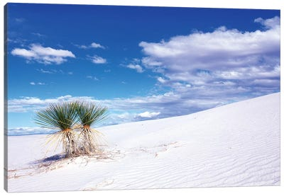 Soaptree Yuccas, White Sands National Monument, Tularosa Basin, New Mexico, USA Canvas Art Print