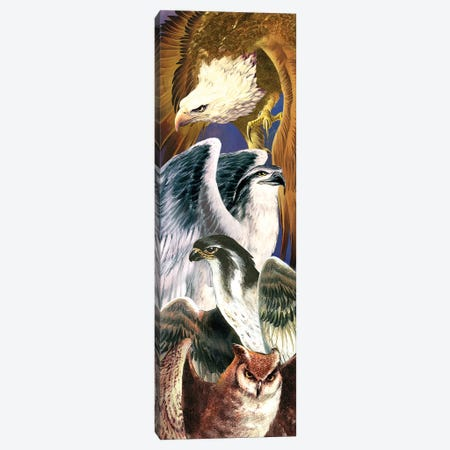 4 Birds Of Prey Canvas Print #RTP1} by Ruth Thompson Canvas Artwork