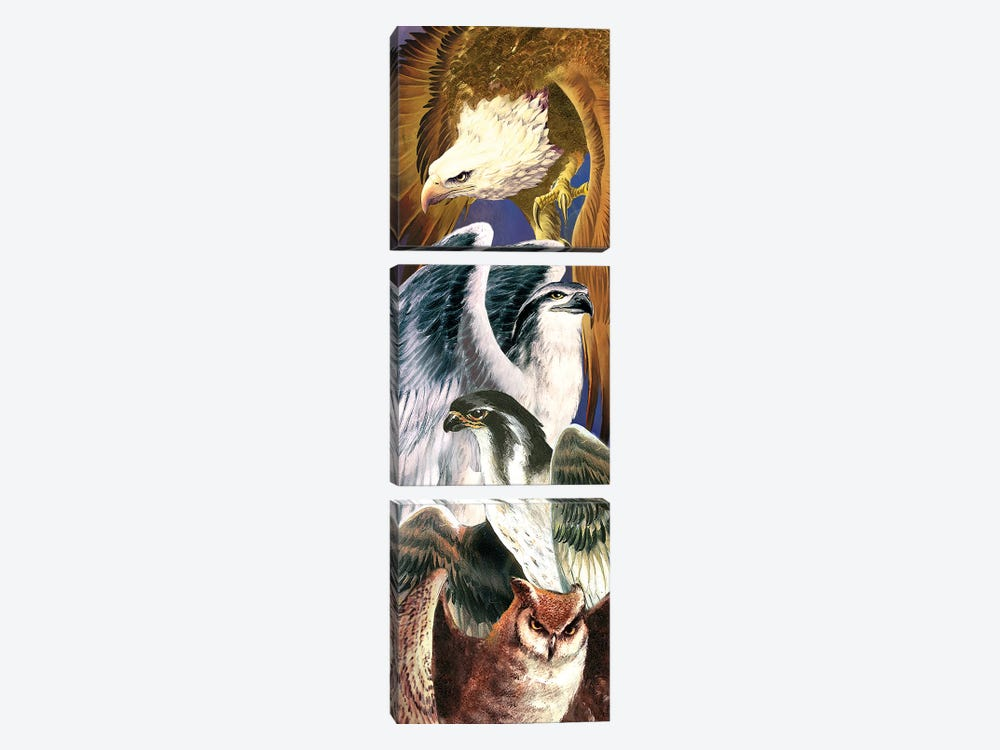 4 Birds Of Prey by Ruth Thompson 3-piece Canvas Art
