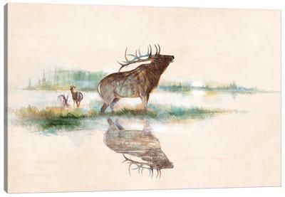 Misty Elk Canvas Art Print
