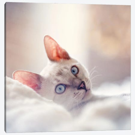 Cozy Cat Canvas Print #RUP13} by Rupa Sutton Canvas Art Print