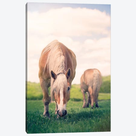Grazing Canvas Print #RUP24} by Rupa Sutton Canvas Print