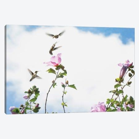 Hummingbird Games Canvas Print #RUP27} by Rupa Sutton Canvas Art Print
