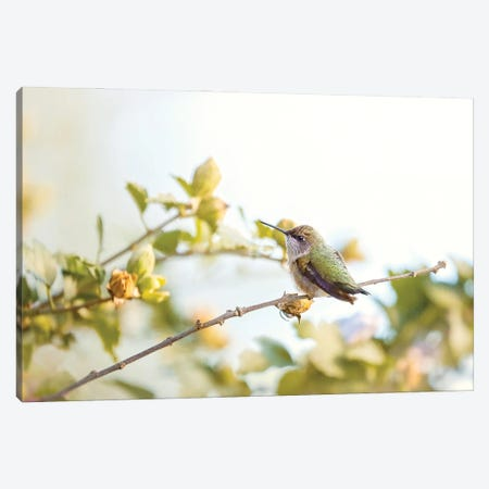 Last Days Of Summer Canvas Print #RUP29} by Rupa Sutton Canvas Artwork