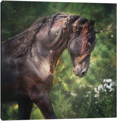 Magical Luca Canvas Art Print