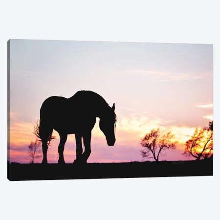 Sunset Silhouette Canvas Print #RUP59} by Rupa Sutton Canvas Art Print