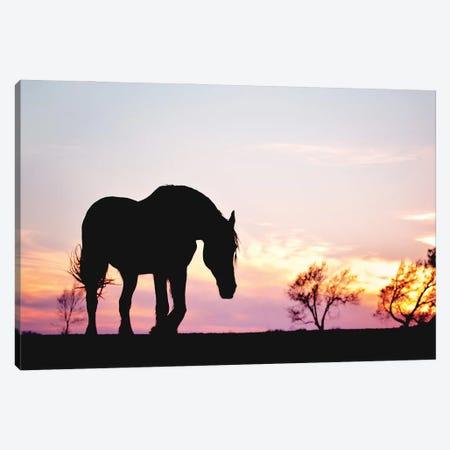 Sunset Silhouette Canvas Print #RUP59} by Rupa Sutton Canvas Art Print