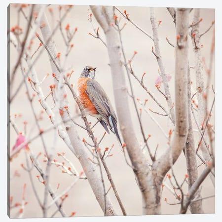 Sweet Little Robin Canvas Print #RUP61} by Rupa Sutton Canvas Artwork