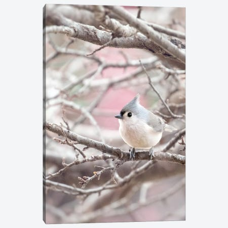 Tufted Titmouse Canvas Print #RUP68} by Rupa Sutton Canvas Art