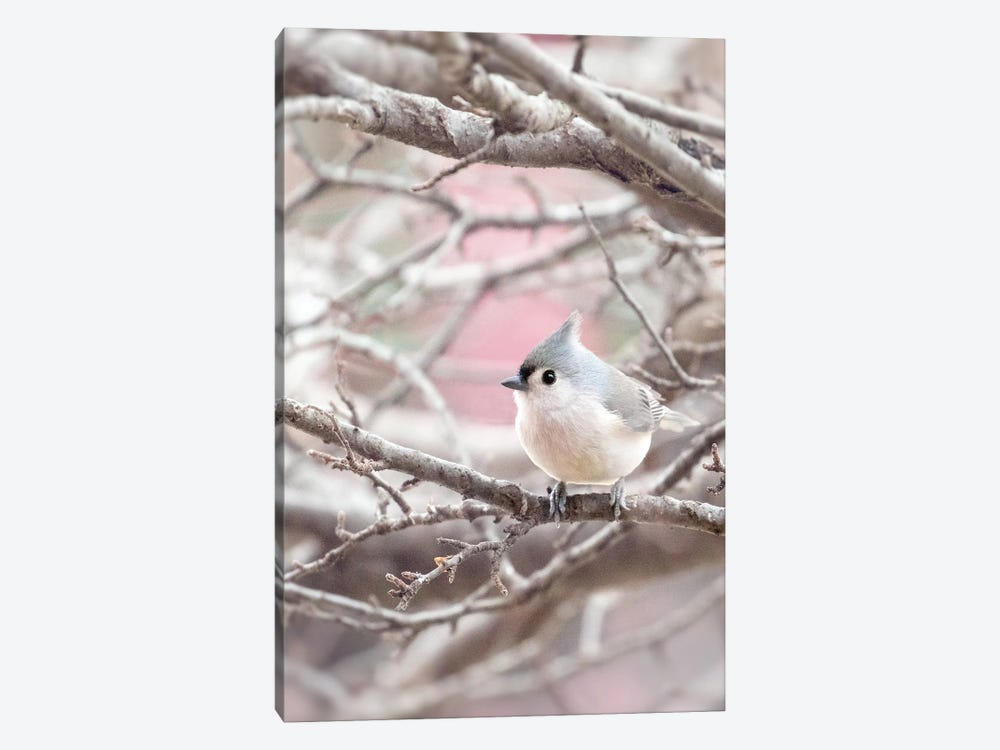 Tufted Titmouse by Rupa Sutton 1-piece Canvas Wall Art