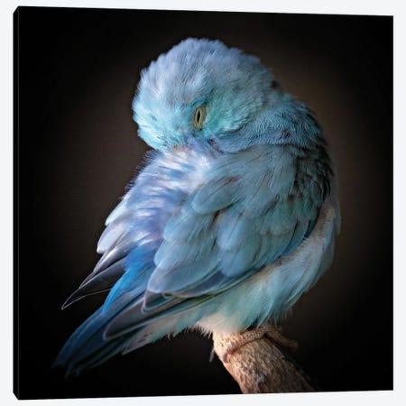 Blue Bird Canvas Print #RUP73} by Rupa Sutton Canvas Print
