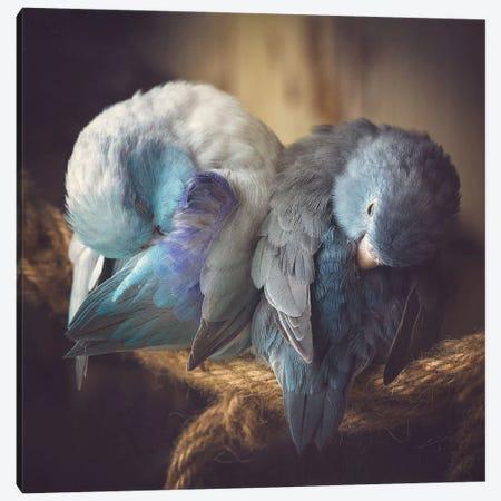 Blue Beauty Canvas Print #RUP7} by Rupa Sutton Canvas Artwork