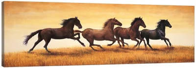 Stallions at Sunset Canvas Art Print