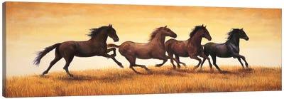 Stallions at Sunset Canvas Art Print