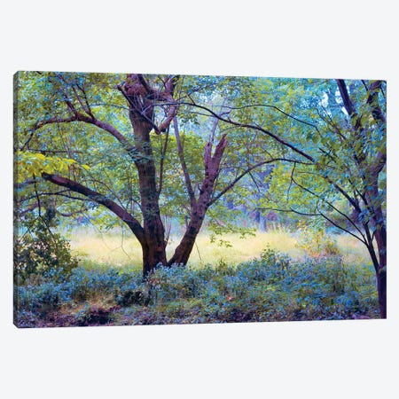 Forgotten Day Dreams Canvas Print #RVR14} by John Rivera Canvas Wall Art