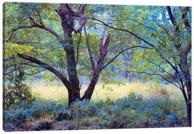Forgotten Day Dreams Canvas Art Print