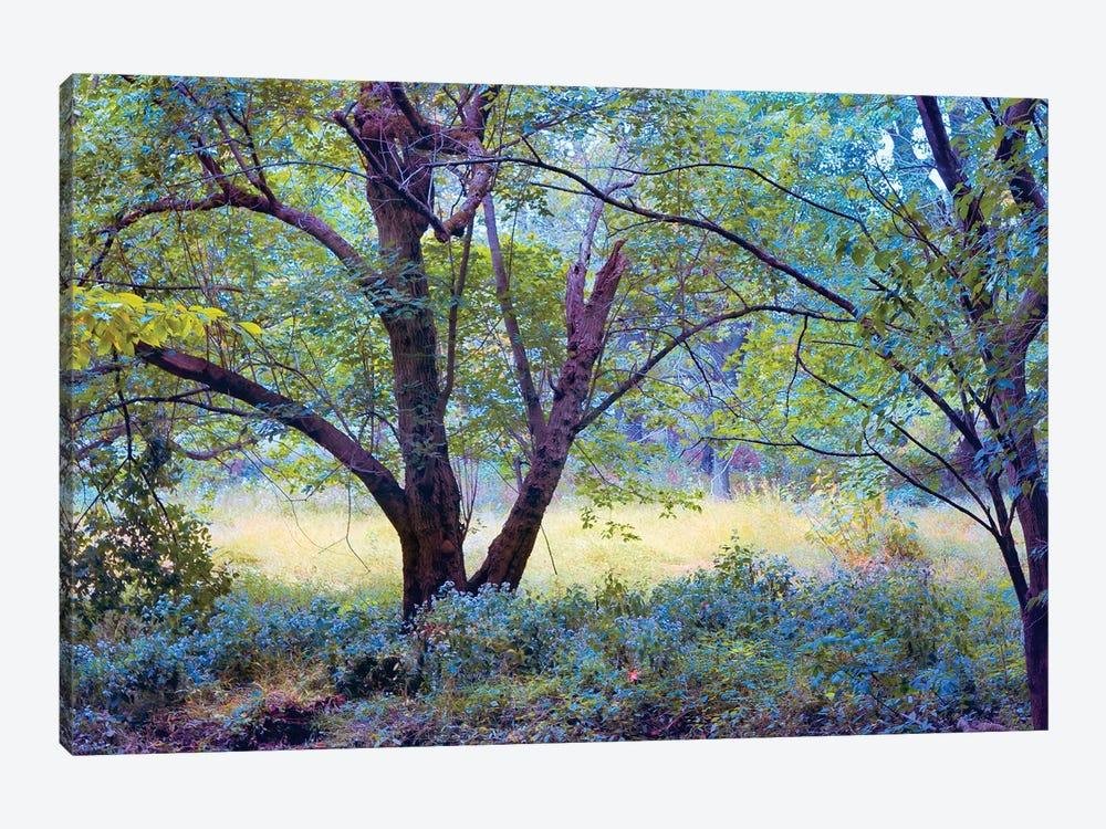 Forgotten Day Dreams by John Rivera 1-piece Canvas Artwork